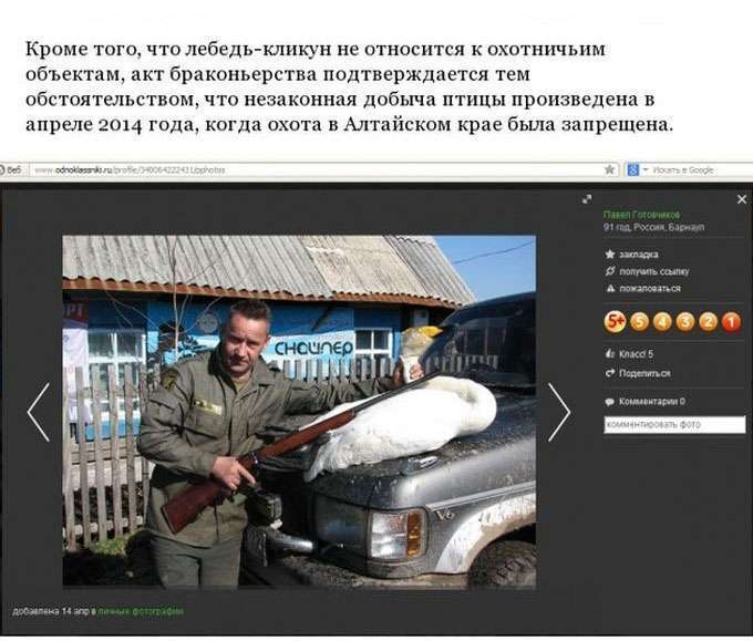 На алтайського мисливця-браконьєра заведено кримінальну справу (3 фото)