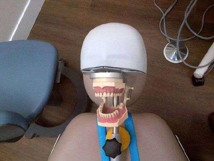 На чому тренуються студенти-стоматологи (14 фото)