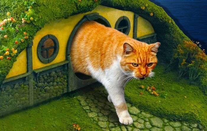 Котячий будинок шанувальника фентезі (16 фото)