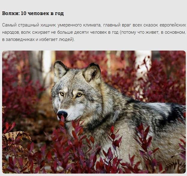 Представники тваринного світу, відкриті в минулому році (15 фото)