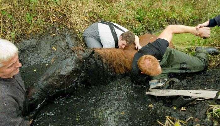 Порятунок коні з болота (7 фото)