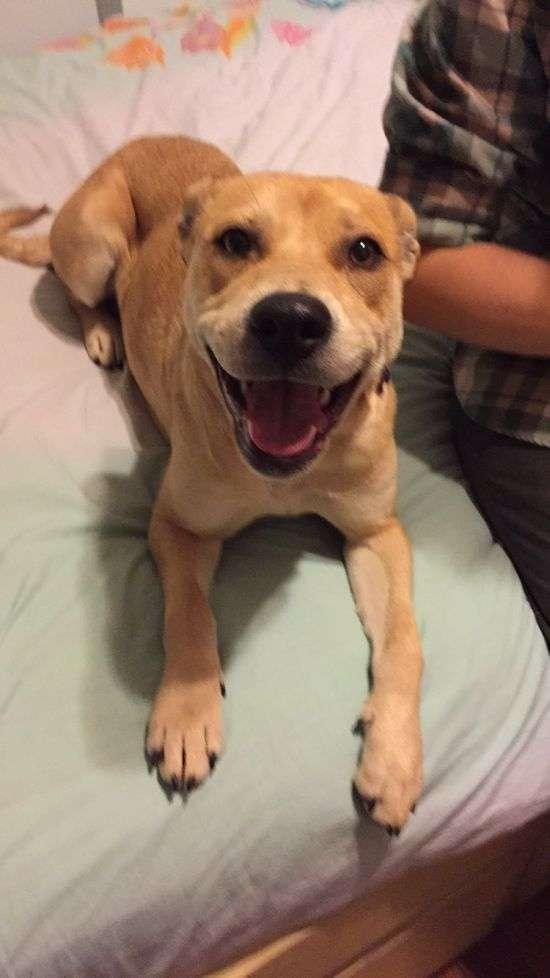 Щаслива собака отримала нових господарів (2 фото)