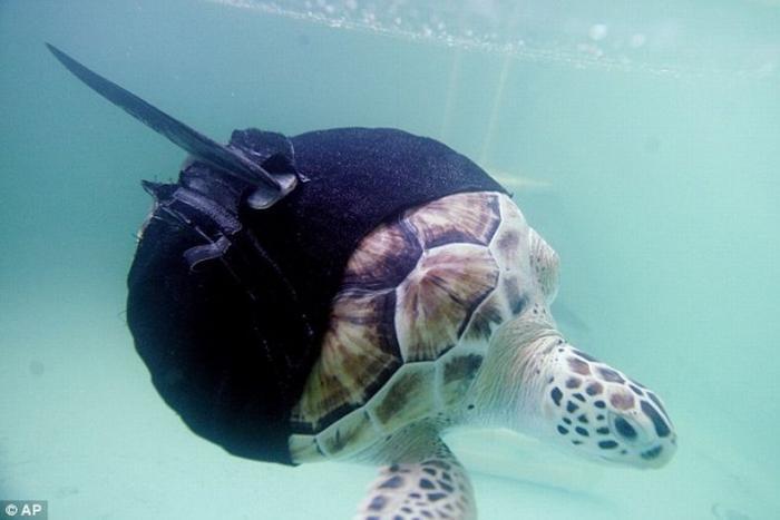 Черепаха с акульим плавником Интересное