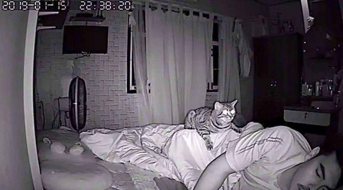 Запись со скрытой камеры: что делает кот, когда спит хозяин интересное