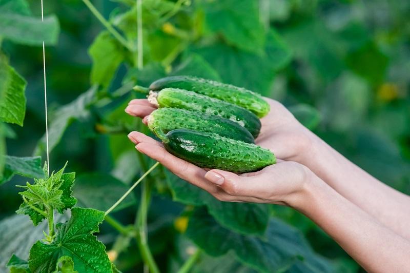 Как применять соду в огороде Вдохновение