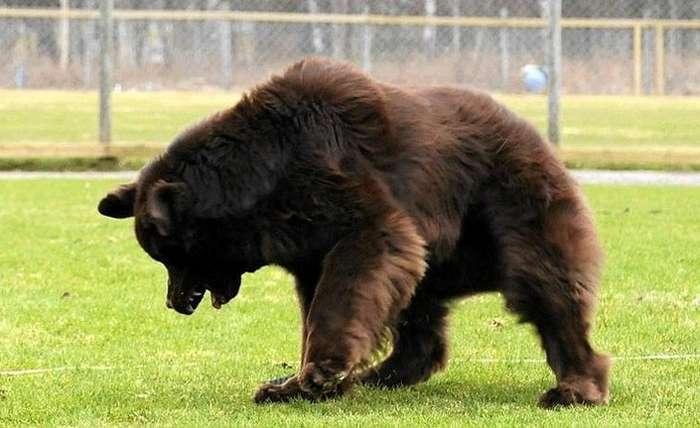 20+раз, когда люди мечтали оручном медведе, нозавели собаку— инепрогадали Интересное