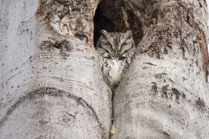 Когда животные — боги маскировки   Интересное