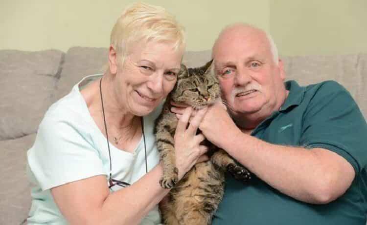 Самому самому коту в мире исполнился 31 год истории из жизни