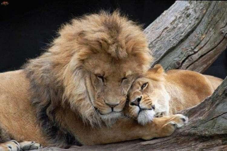 Влюблённые зверушки картинки