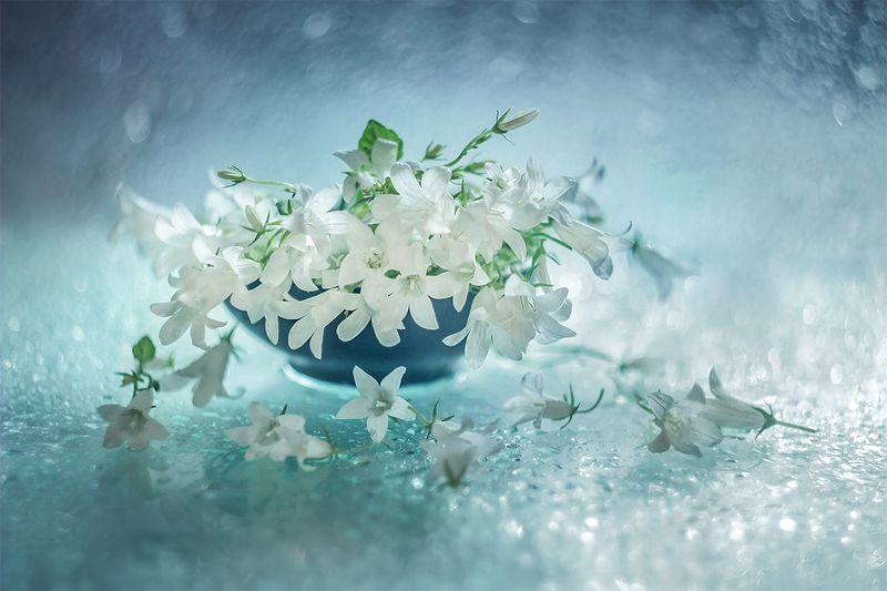 Раскрасив мир хрустальной акварелью... фотография