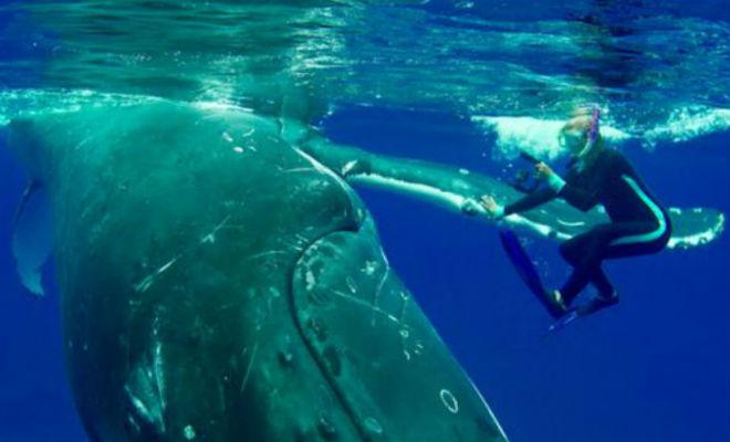 Огромный кит бросился к дайверу и спас ему жизнь акула