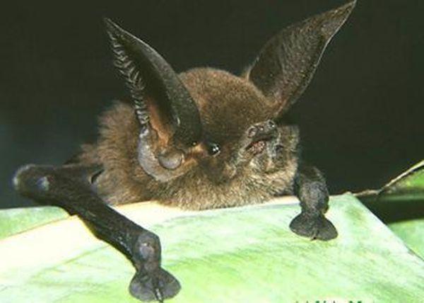 Самые некрасивые животные мира животные