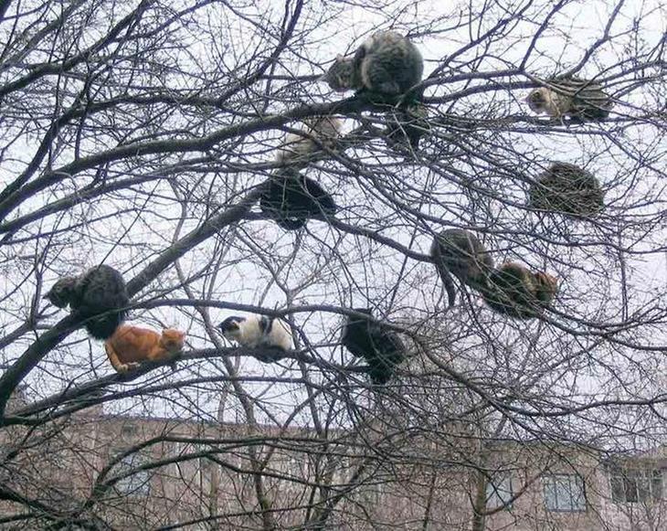 Весна пришла — коты прилетели веселые картинки