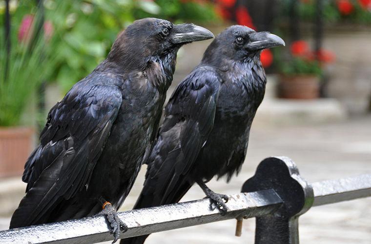 Понимают ли животные из разных стран «язык» друг друга? Статьи