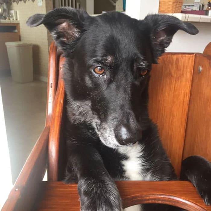 У собаки обнаружилась серьезная болезнь, но ее хозяева не отказались от любимицы истории из жизни