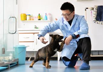 В Китае планируют клонировать полицейских собак для эффективного поиска наркотиков зверушки,живность,питомцы, Животные